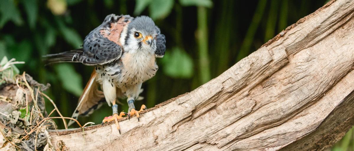 Permalink auf:Greifvögel