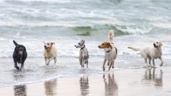 Permalink auf:Hunde