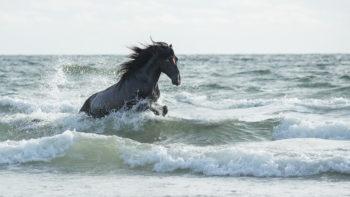 Permalink auf:Pferde